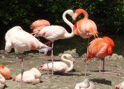 I Heart Flamingos!